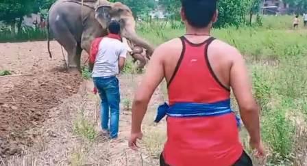 Mad Elephant- Angry