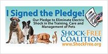 Shock Free Coalition