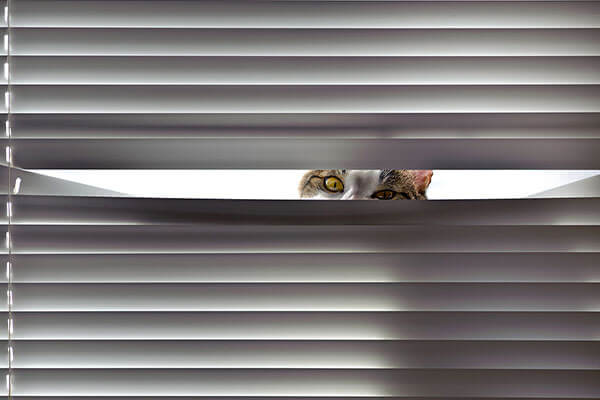 Window Blinds and the Advantages They Present to Homeowners