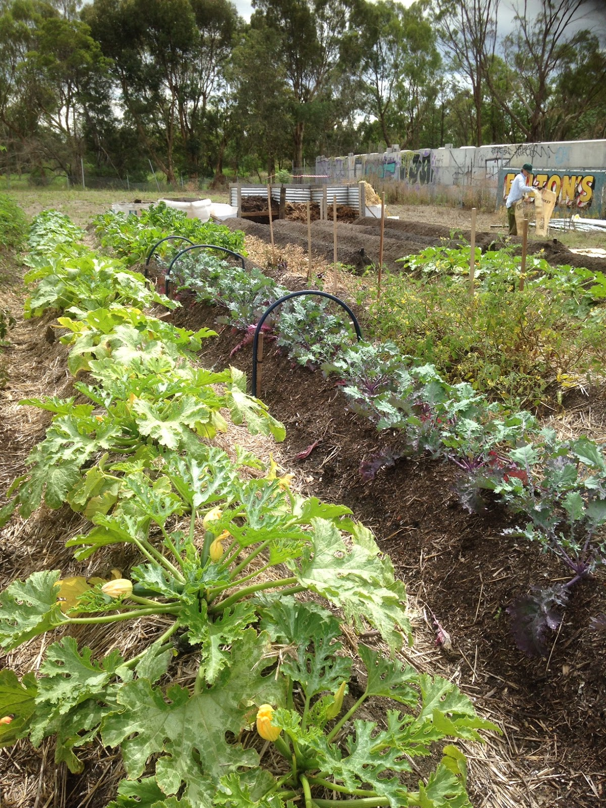 Climate Smart Food: Gardening in a Changing Climate – Part 2