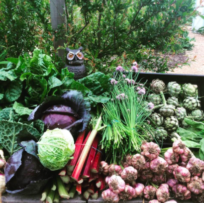 Cultivating Resilience: A Beginners Guide to Home Food Production – Part 1