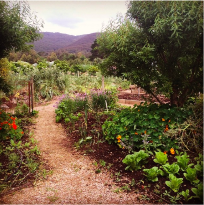 Cultivating Resilience: A Beginners Guide to Home Food Production – Part 3