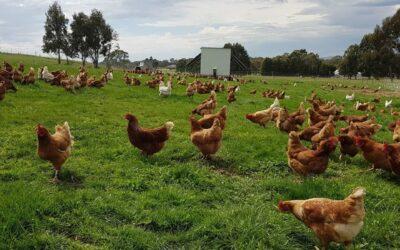 Farmer Profile: Annemaree Docking of Dalhousie Farm