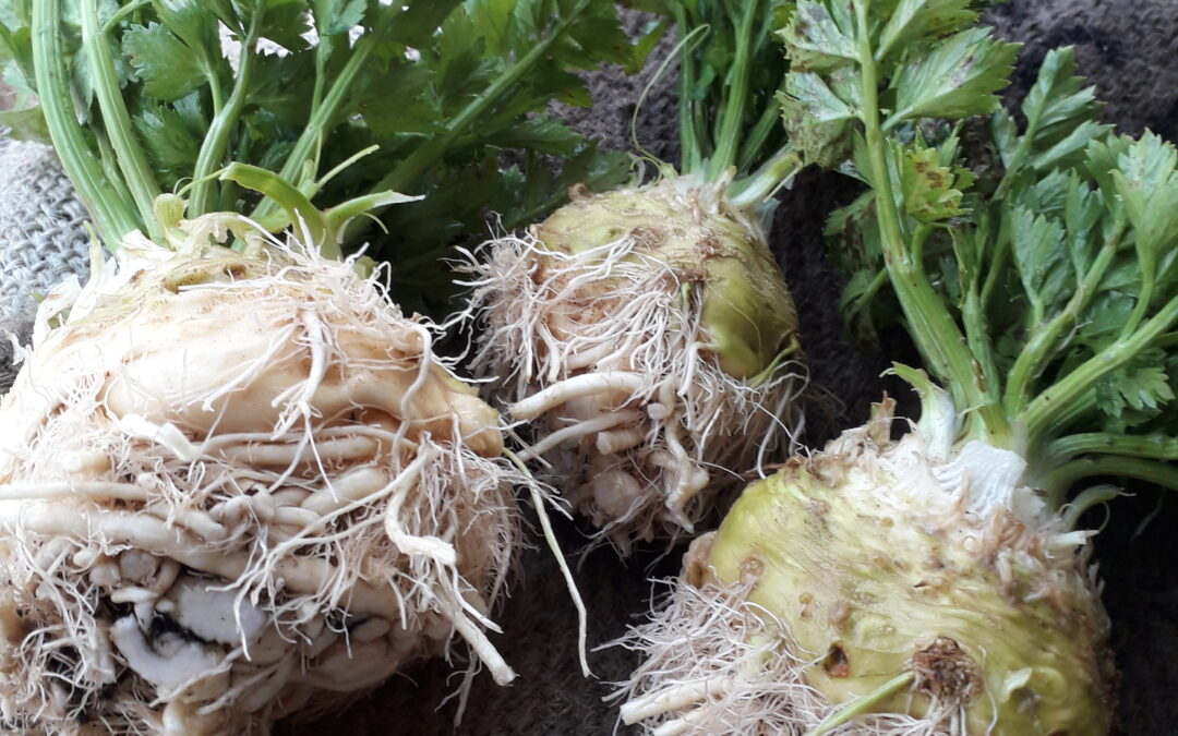 Behold celeriac – the king of ugly/delicious