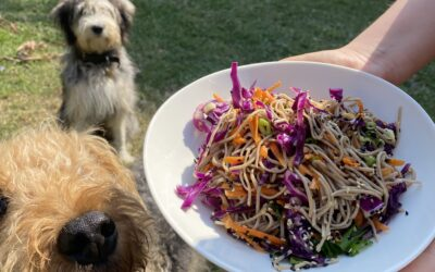 Food in Common: Soba Noodles with Ginger Sauce