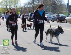 BA68_0246runnersanddogs