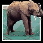 elephant-150x150