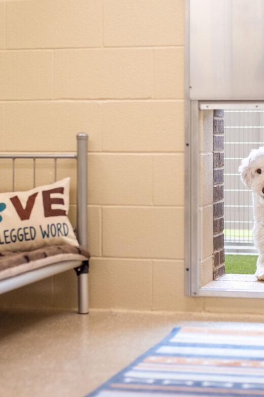 Indoor/Outdoor Suites for Dogs