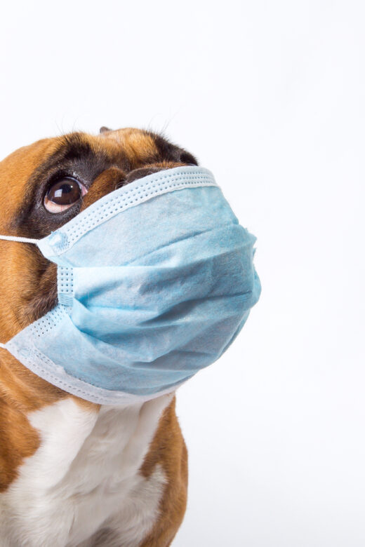 Separate Quarantine for Pets who are Sick