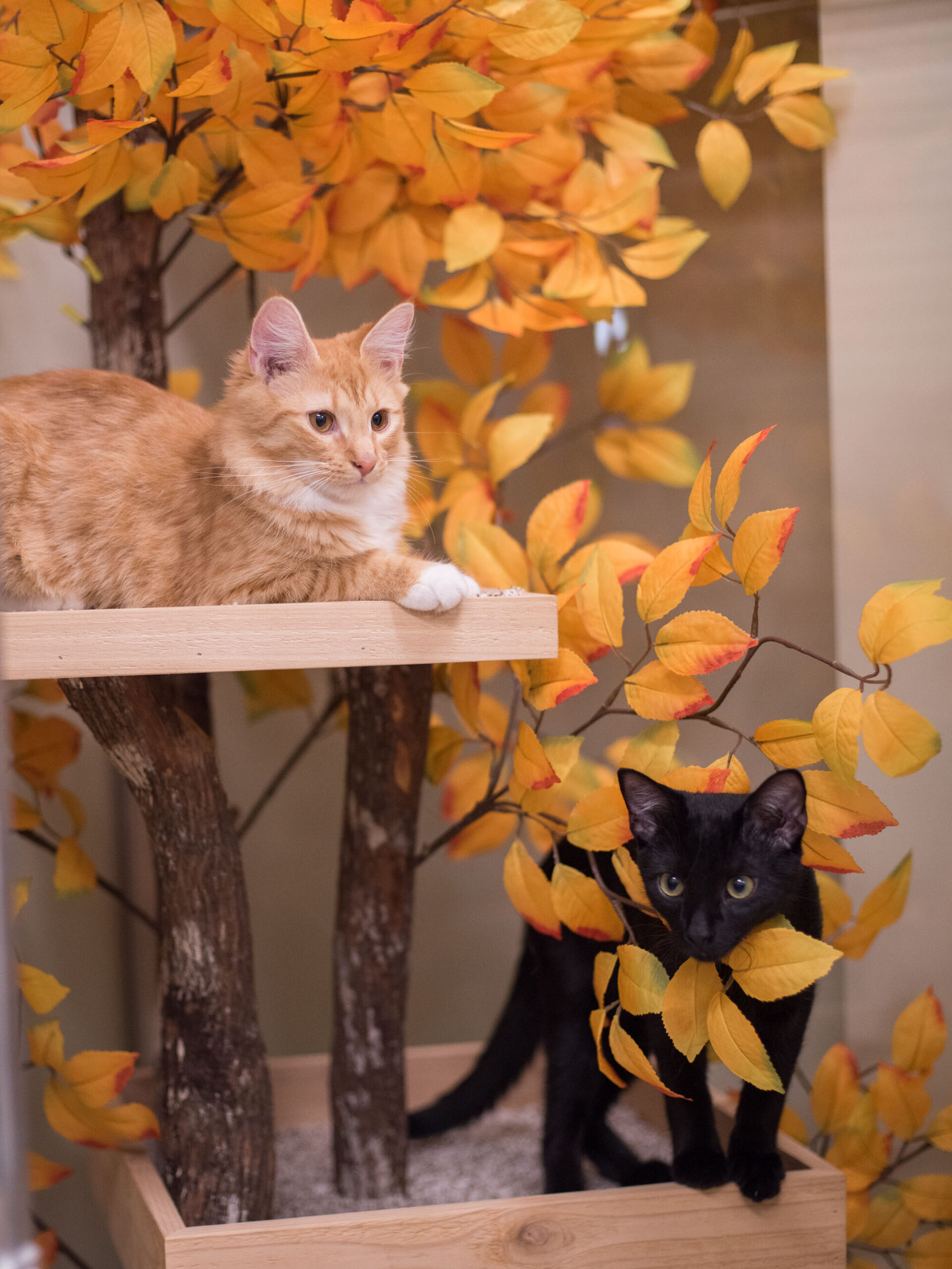 Two Cats playing on Cat Tree