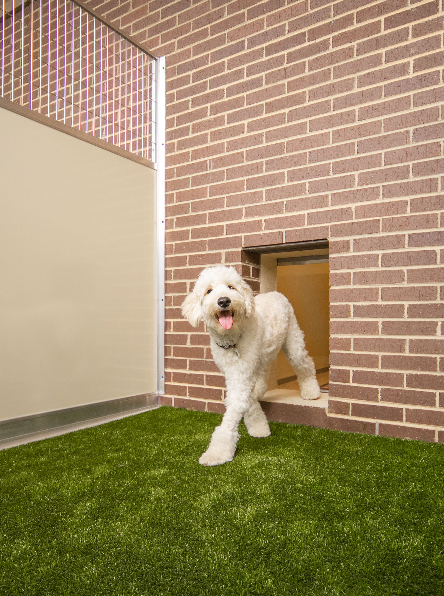 Dog leaves Indoor Suite into Private Yard
