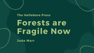 Forests are Fragile Now