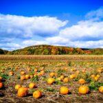 Pumpkin and Spice – So Very Nice