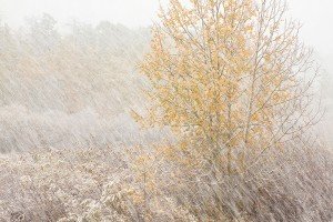 """Autumn Snowstorm"" by Alan Bickett"