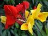 Key West Florals