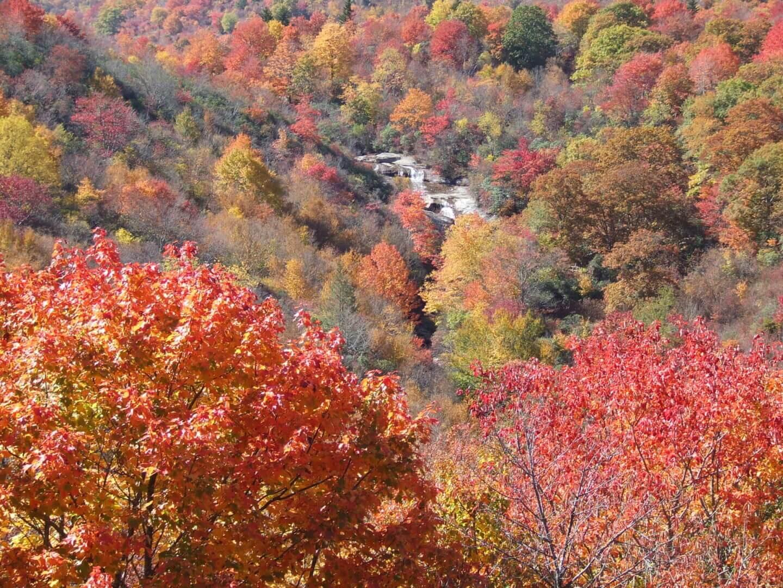 Autumn trees and foliage