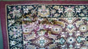 Dirty Rugs need Cleaning service