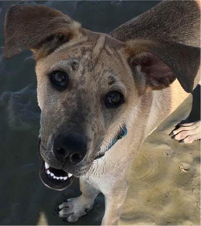 smiling wet dog on sandbar