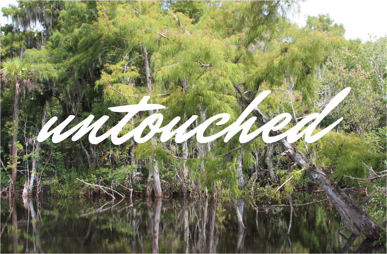 cypress trees reflecting on the loxahatchee river