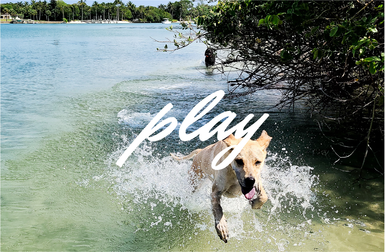 dog leaping and playing in the intracoastal waterway