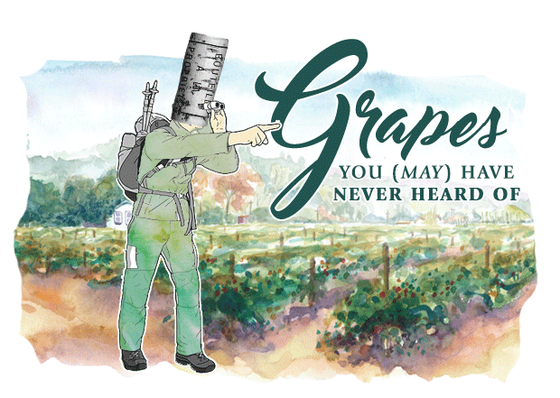 Best Grapes You (May) Have Never Heard Of