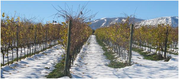 Meet the Winemaker: Fausto Albanesi