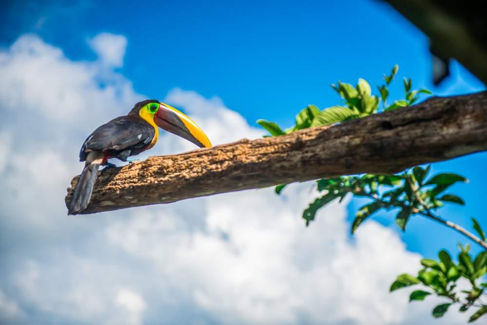 Parrot in tree