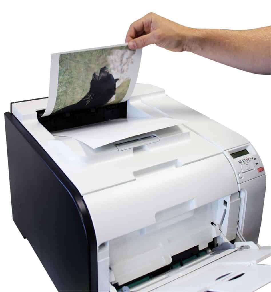 Birchwood Casey Print-N-C Targets