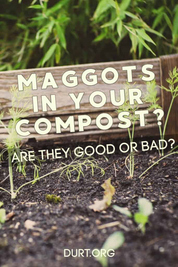 are maggots in your compost good or bad