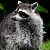 Rabies alert issued for portion of Fort Lauderdale