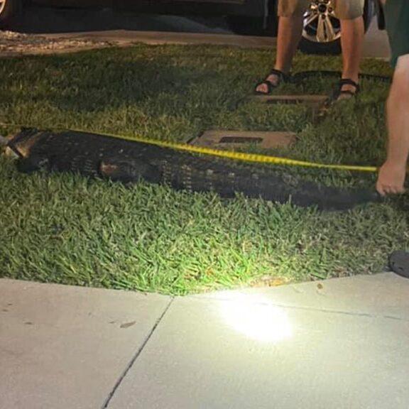 7-Foot Alligator in Garage of Her Home
