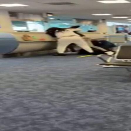 Caught on camera: Fist fights break out at Miami International Airport, Gate D14