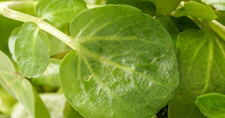 Greek Spinach Dip