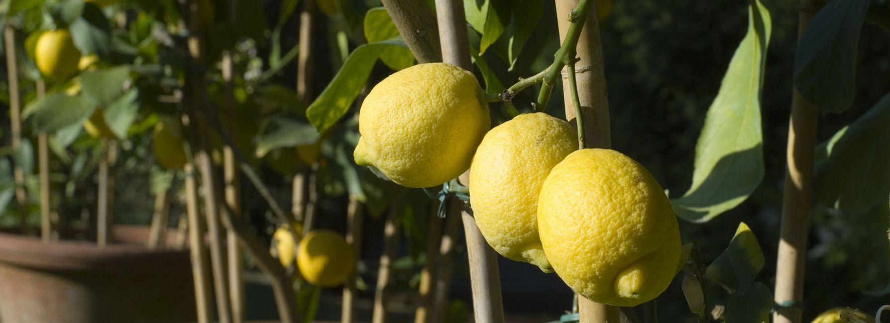 Lemon Mushroom Orzo