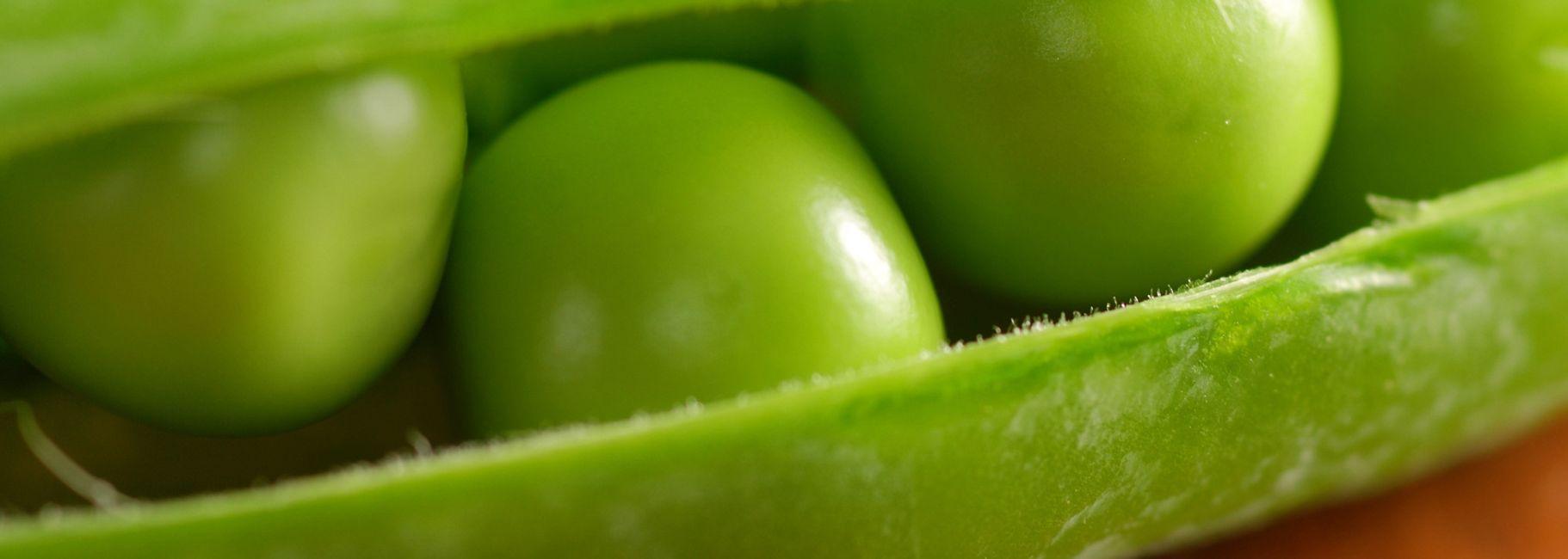 Penne with Asparagus Sage & Peas