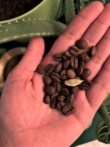 Cardamom and coffee beans combine in the recipe for columnist Sharada Rayan's morning beverage of choice, Cardamom Coffee