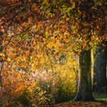 MaxPixel.net-Leaves-Park-Nature-Autumn-Tree-Sycamore-3823742