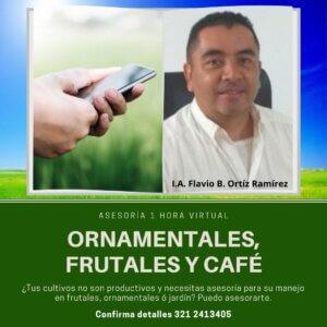 #AsesoríaOrnamentalesFrutalesCafé