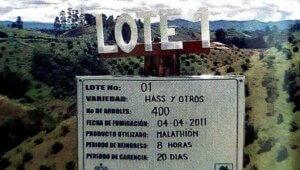 #SeñalizaciónAplicaciónAgroquímicosEnAguacate, #SeñalizaciónAplicaciónAgroquímicosEnAguacate