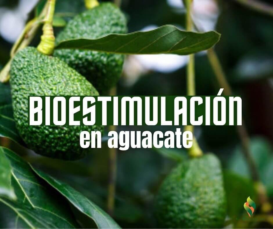 #BioEstimulaciónEnAguacate