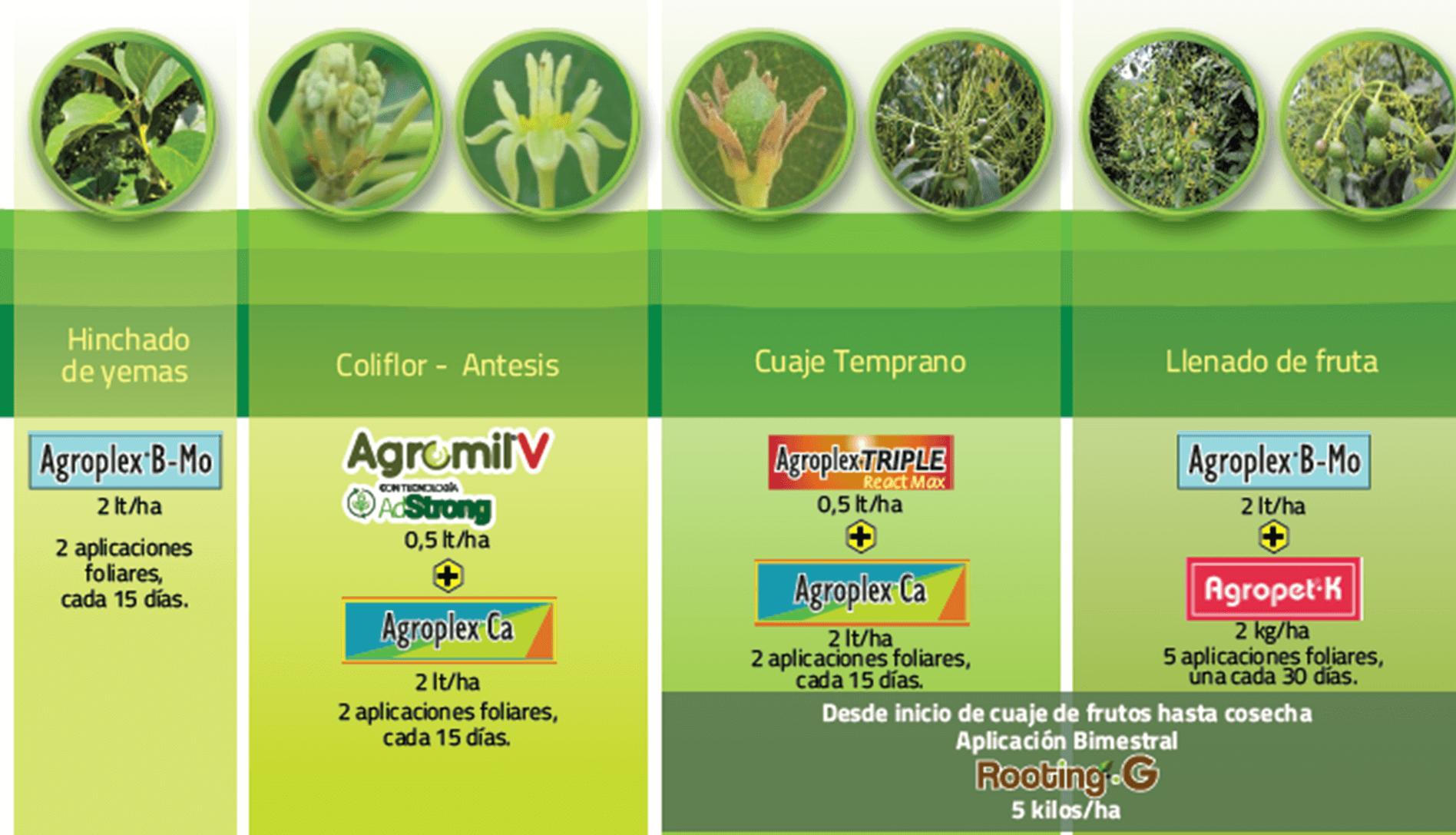#FenologíaDelCultivoDeAguacateBioestimulación, #EnTuFinca