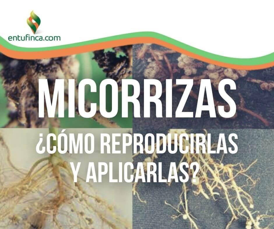 MicorrizasQueSon-ReproduccionyAplicacion