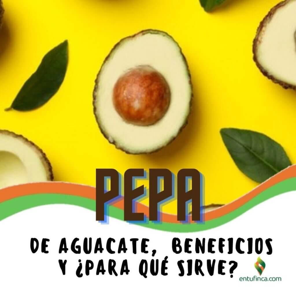 #PepaAguacateHass, #EnTuFinca