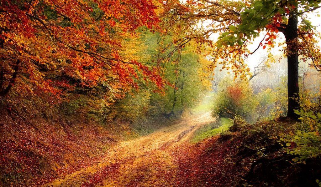 road, forest, season