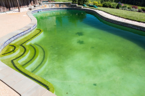 bigstock-Filthy-Backyard-Swimming-Pool-45958975-e1401498410204-300x199