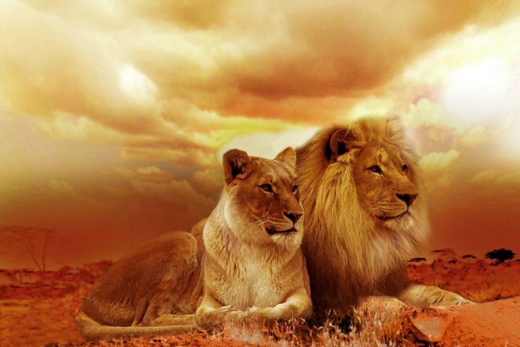 lion-577104_1920-1024x685