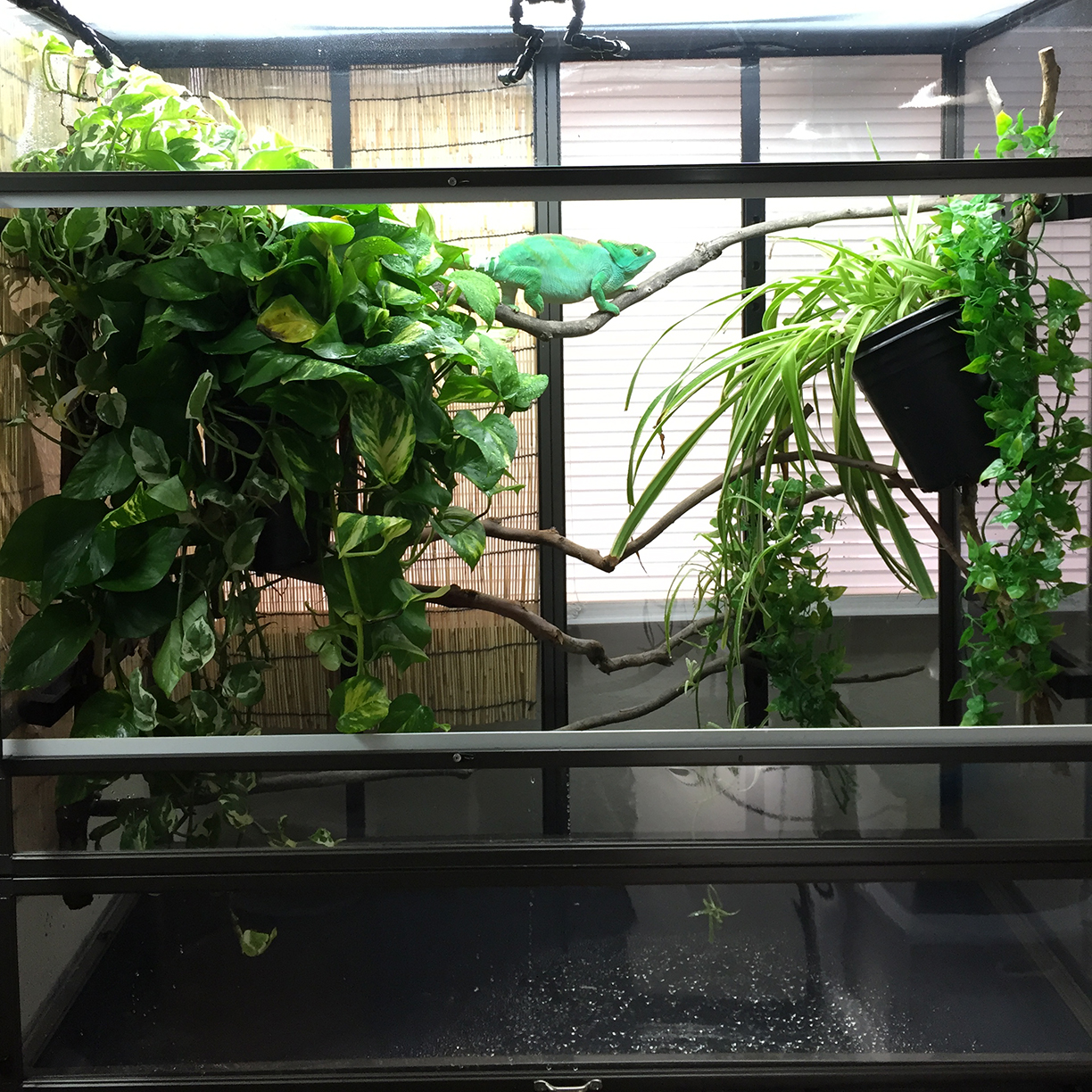 Chameleon cage floor with Dragon Strand drip easy drainage tray 1024