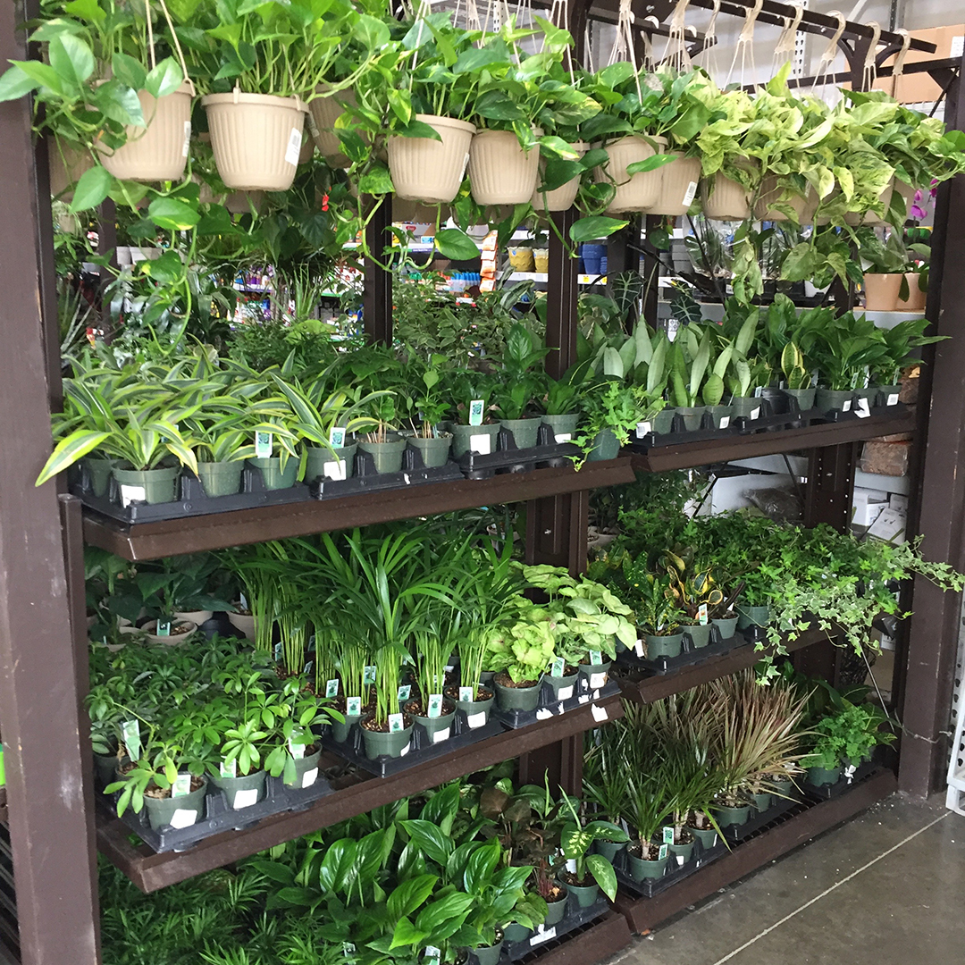 Indoor Plant Section