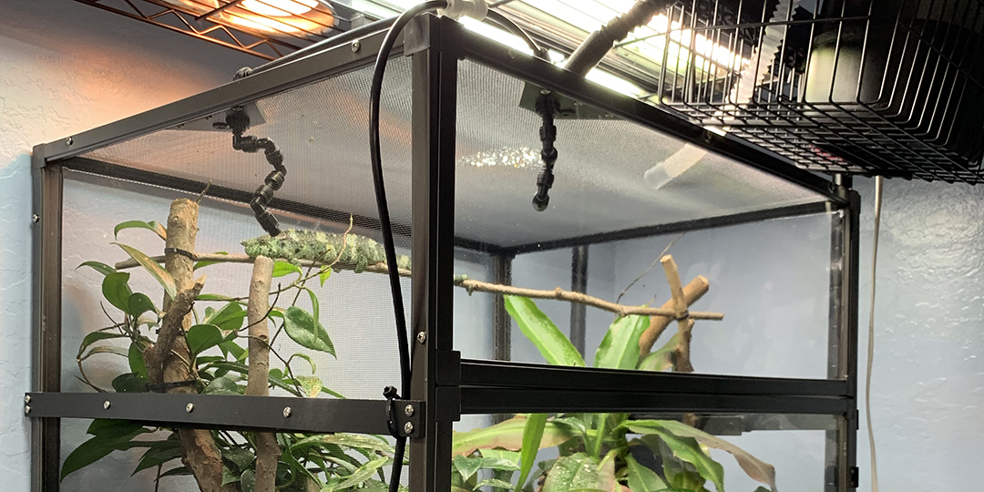 chameleon cage in the corner 221