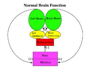 normalbrainfunction-300x227